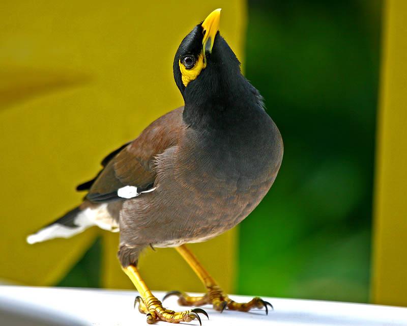 Poemas del río Wang: Bird Calls - photo#19